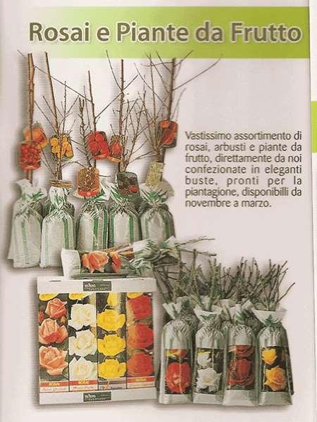 Piante da frutta nane for Piante da frutto nane in vaso
